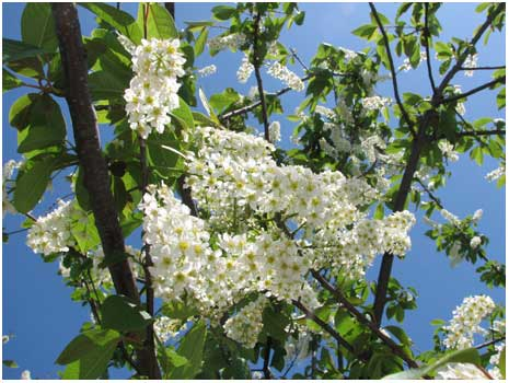 SBflowertreeblog.jpg