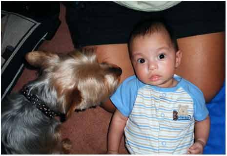 SkippySiennaClearblog.jpg