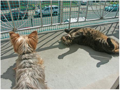 animalsunbathhissblog.jpg