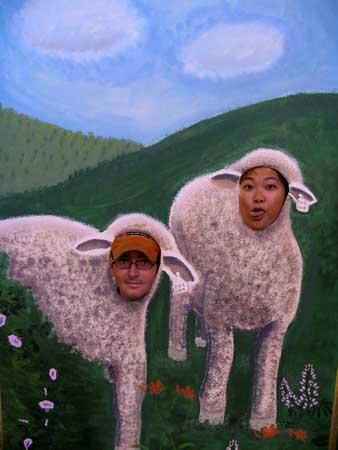 sheepblog.jpg